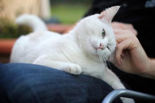 Peut On Laver Un Chaton : caresser votre chat peut tre tr s dangereux selon une tude r cente crazy news ~ Melissatoandfro.com Idées de Décoration